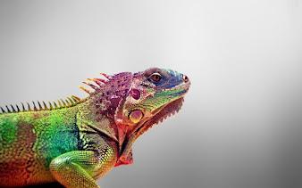 #8 Iguana Wallpaper