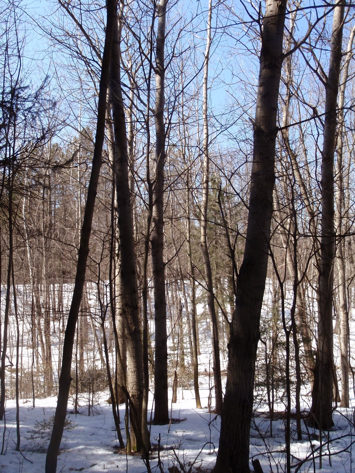 Ice Age Trail - Northern Kettle Moraine - Greenbush Rec Area