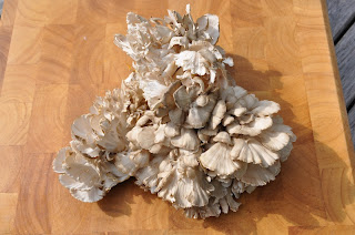 Interferon in maitake mushroom is a protein synthesized.