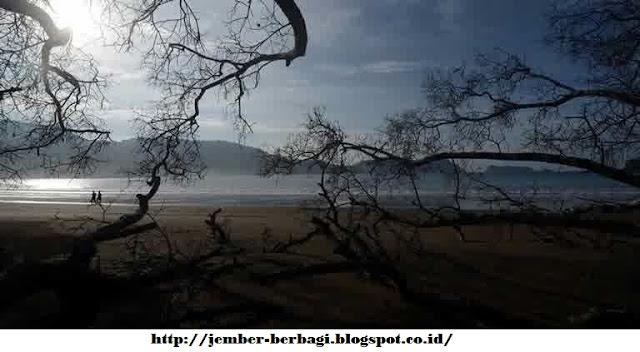 keindahan pantai bandealit jember