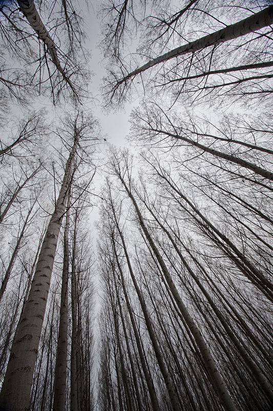 El espejo con memoria reflexiones de un fot grafo for Lo espejo 0450 el bosque