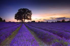 ,,Dziś zrób to czego innym się nie chce, a jutro będziesz mieć to o czym inni tylko marzą''