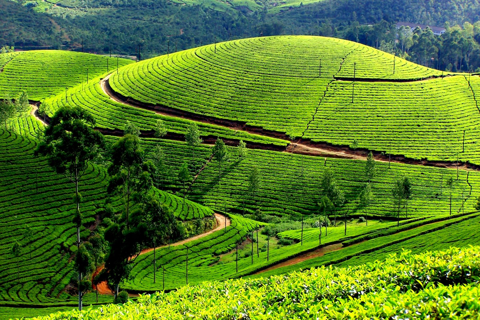 Beautiful Munnar Photos