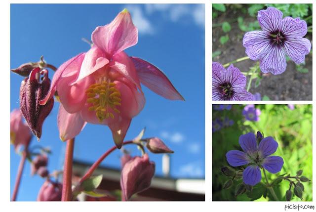 haaste: kolme kukkakuvaa 3. päivä