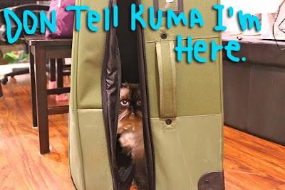 Goma_suitcase_02