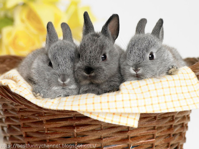 Three sweet bunnies.