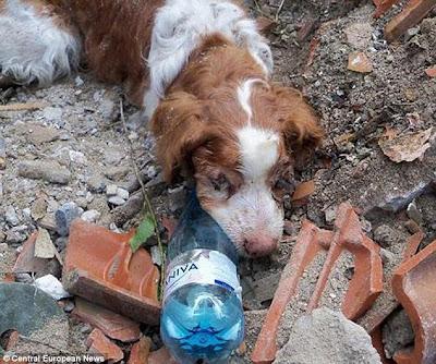 Perro rescatado tras ser enterrado vivo