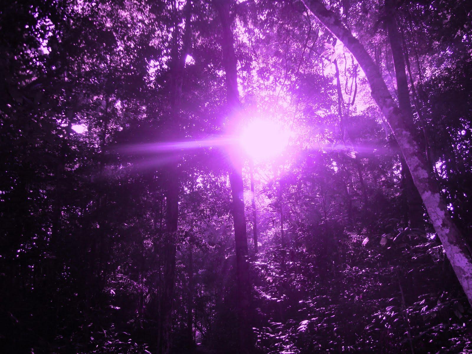 mandala de fogo a violeta chama aspire e emane fátima melissss