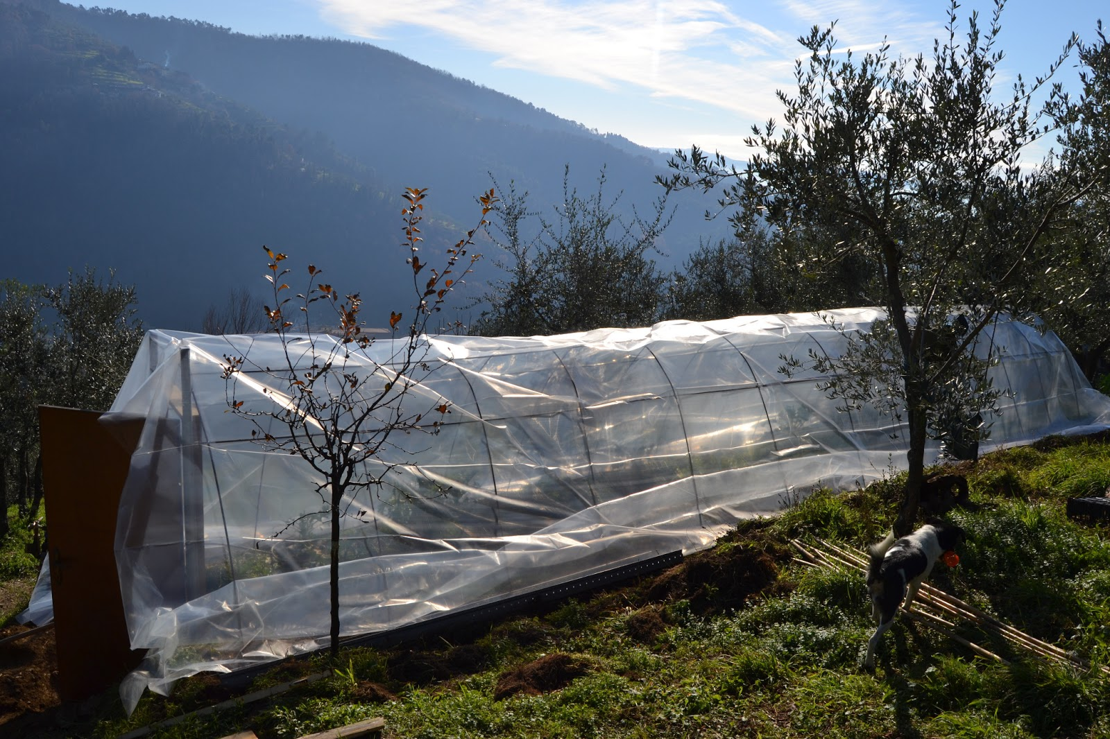 I sogni di harlock costruire una serra nel campo con poco - Costruire una serra in casa ...