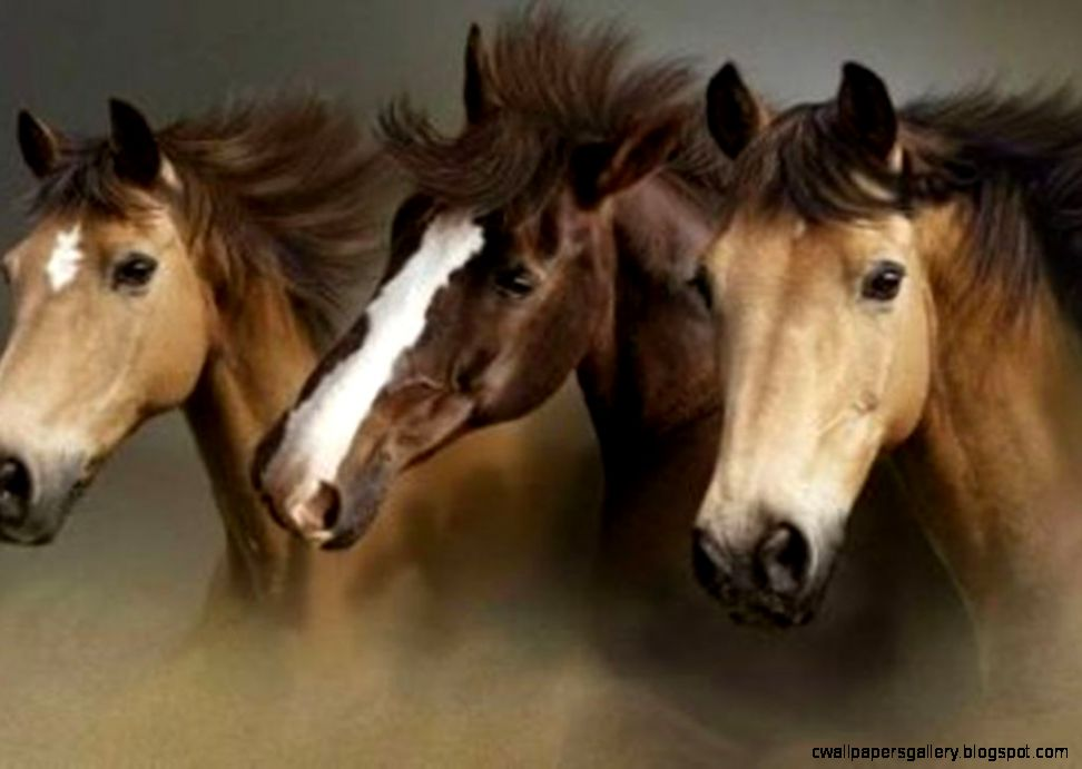 Wild Horse Wallpapers  Top Collections of Pictures Images
