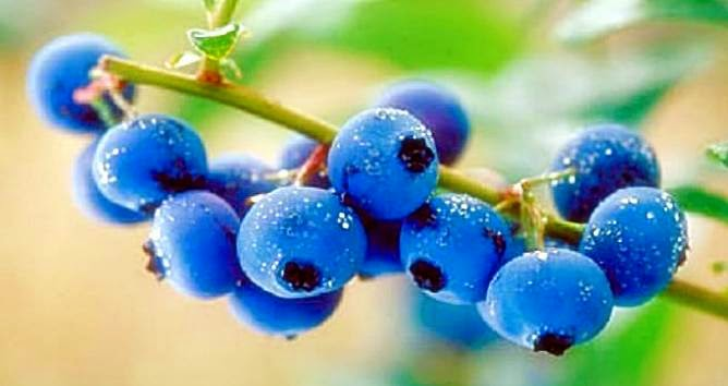 Remove Acne With Blueberries In USA