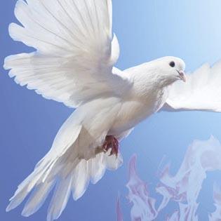 Pomba e fogo, símbolos do Espírito Santo