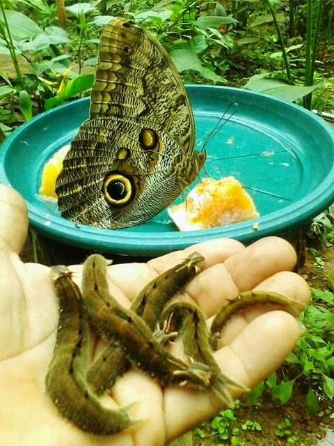 www.butterflyfarmcostarica.com