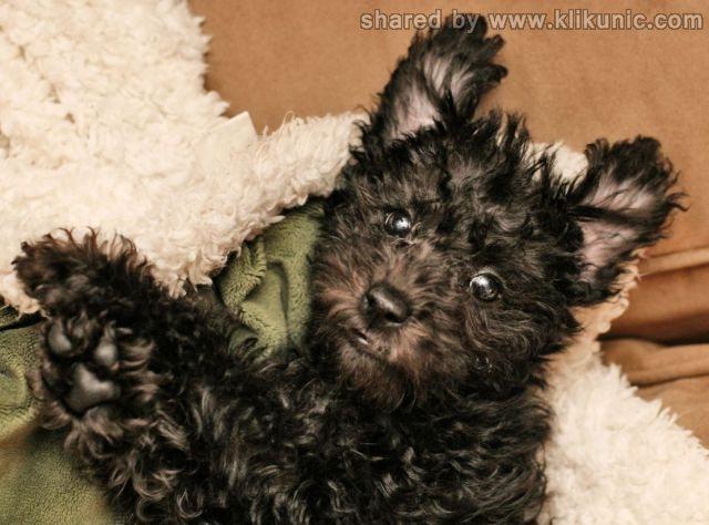http://3.bp.blogspot.com/-8dYStipjSGI/TXzG0l1uTqI/AAAAAAAARGQ/Z7I_N3pxW8E/s1600/these_funny_animals_635_640_36.jpg