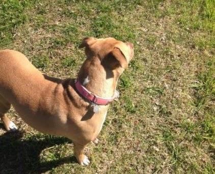 perro-mascota-observa-palo