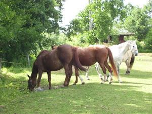 Paarden van het rusthuis