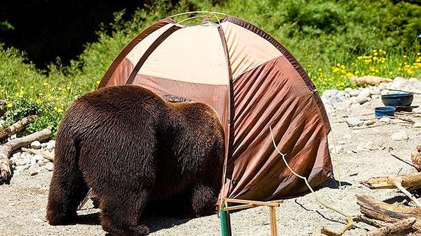 fotos de osos mejor voy a dormir