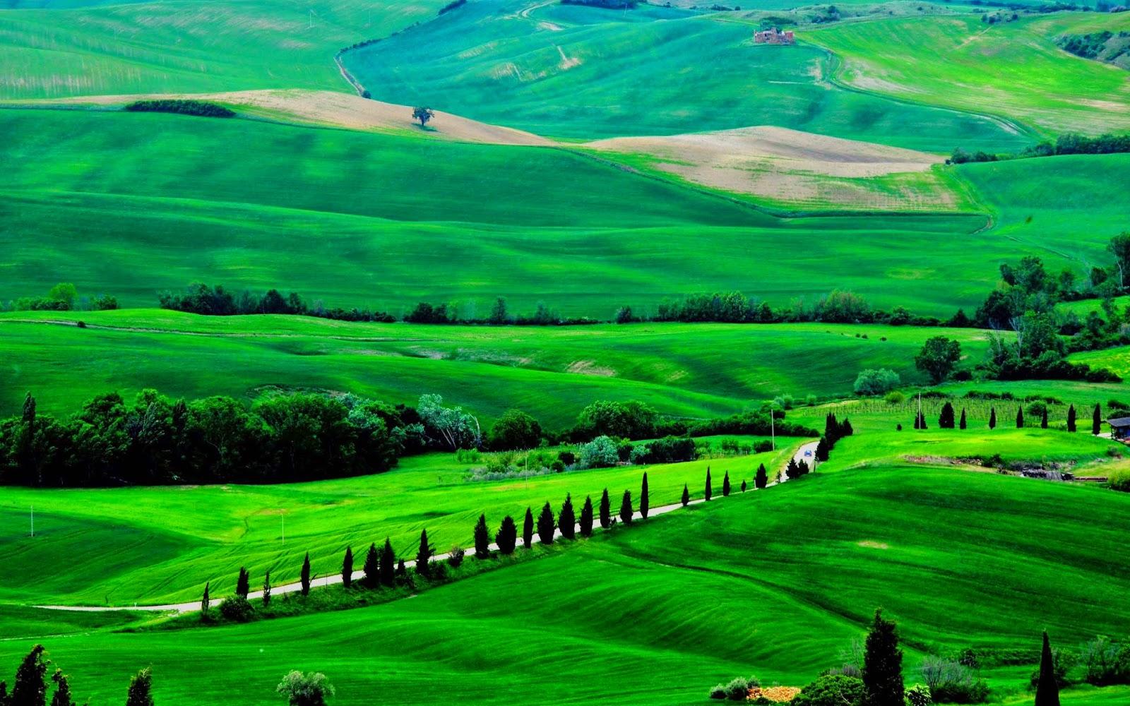 Fresh Green Lanscape Nature Wallpaper