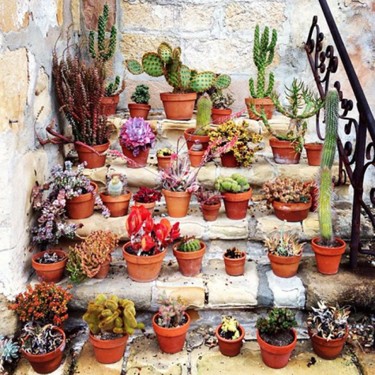 Potted cactus flower plants, low-maintenance plants