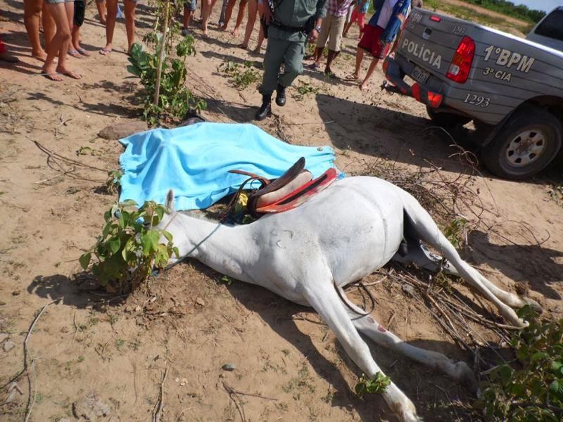 Homem e Cavalo morrem eletrocutado, após queda de fios elétricos