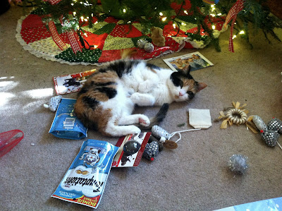 Daisy my cat celebrating Christmas
