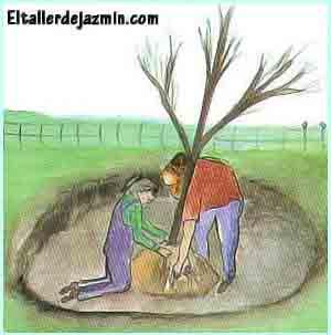 árboles, arbustos, trasplantes