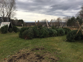 Christmas Tree Farm in Utica NY
