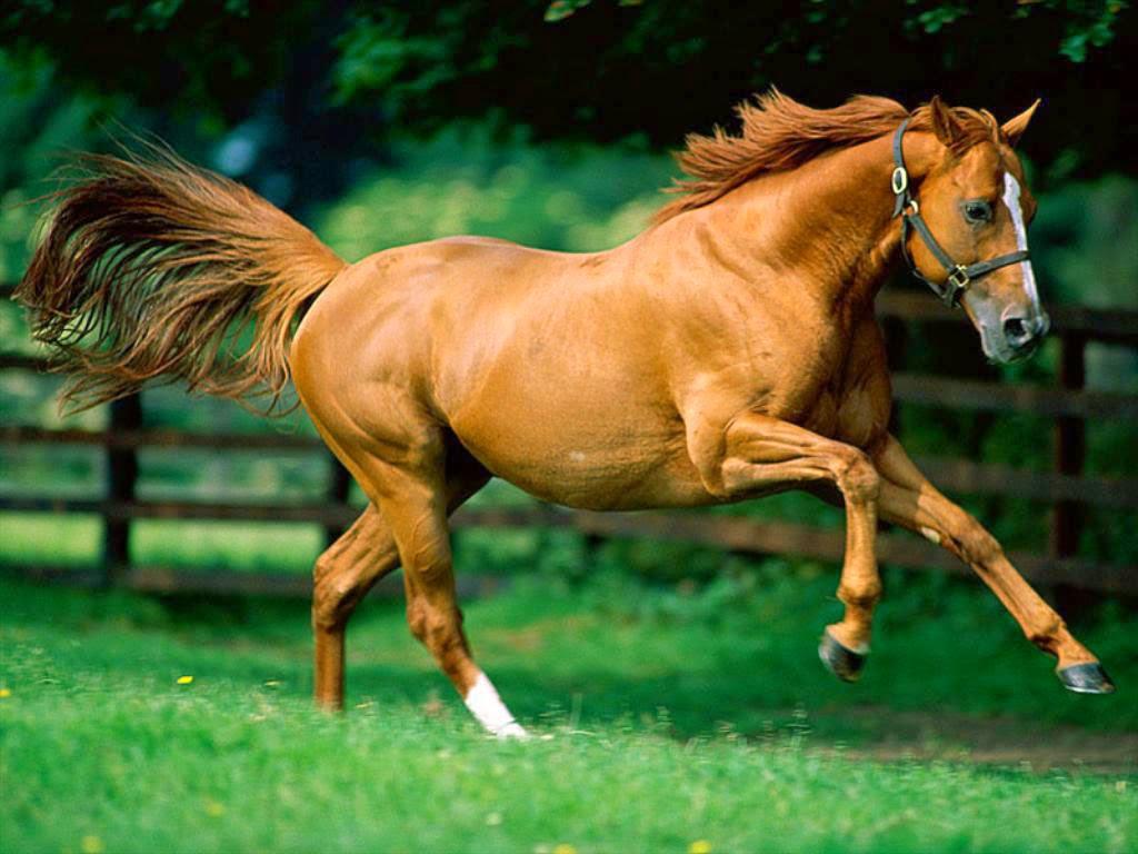 animals horse running free - photo #28