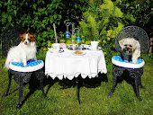 Dogs Tea Party!