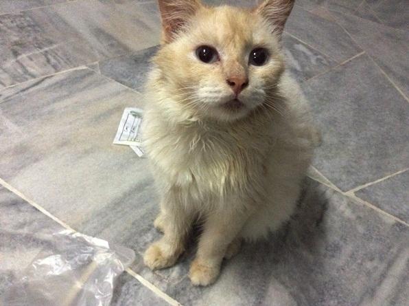cara-cara bagi kucing makan ubat pil, cara-cara bagi ubat berbentuk pil pada kucing, cara-cara bagi kucing makan ubat, kucing makan ubat, kucing demam, ubat untuk kucing yang demam,gambar kucing, gambar kucing cantik, gambar kucing comel,