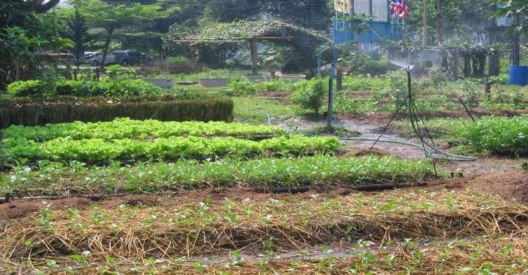 โครงการศูนย์สาธิตเกษตรอินทรีย์แบบผสมผสานวิทยาลัยชุมชนพังงา