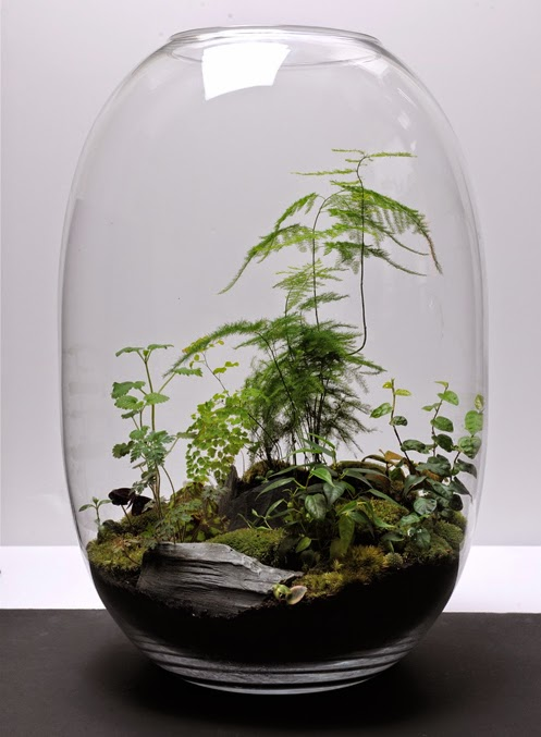 natacha fait sa d co recette pour un terrarium r ussit. Black Bedroom Furniture Sets. Home Design Ideas