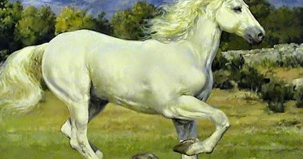 Cuadros modernos ver cuadros de caballos blancos galope - Ver cuadros modernos ...