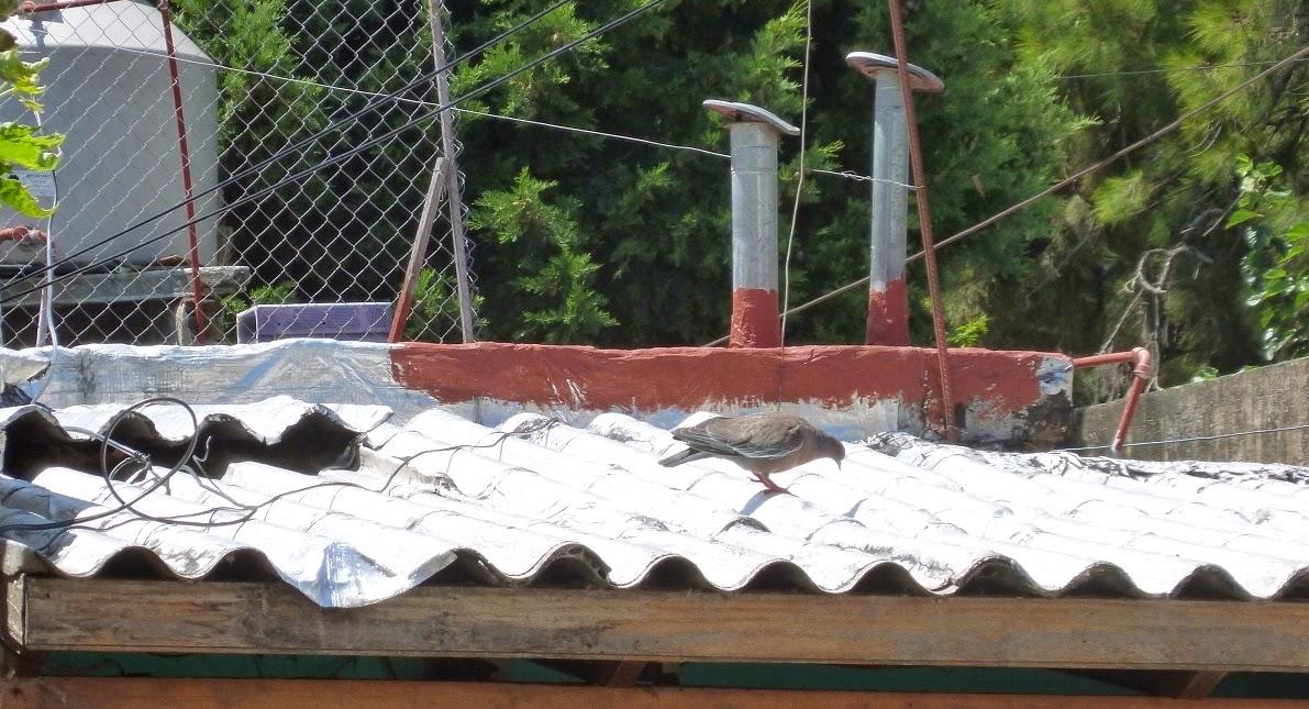 птицы Аргентины