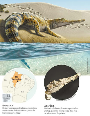 Batrachomimus bones