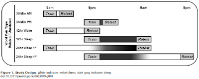 White indicates wakefulness; dark gray indicates sleep. Image: Memory for Semantically Related and Unrelated Declarative Information: The Benefit of Sleep, the Cost of Wake, Jessica D. Payne et al, Plos One