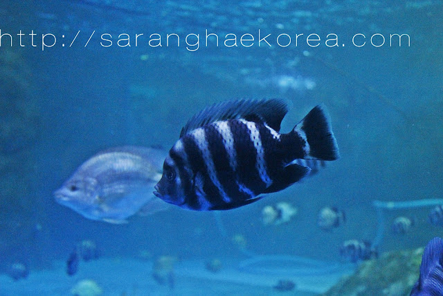 Different variety of fishes at COEX Aquarium
