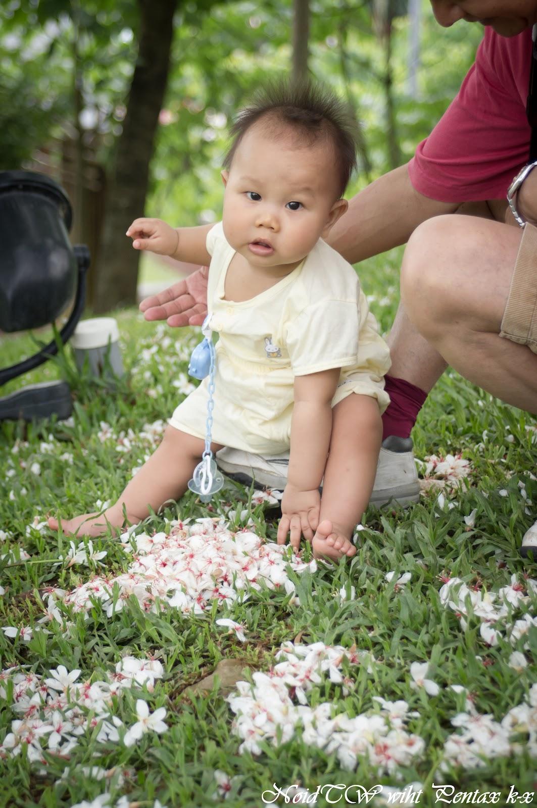 Pentax k-x , 十個月的油桐花初體驗