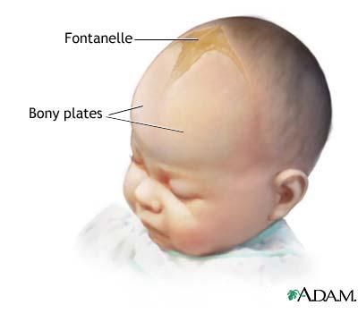 Резултат с изображение за ραφες κρανιου μωρου