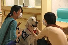 Caring for a Bedridden Dog