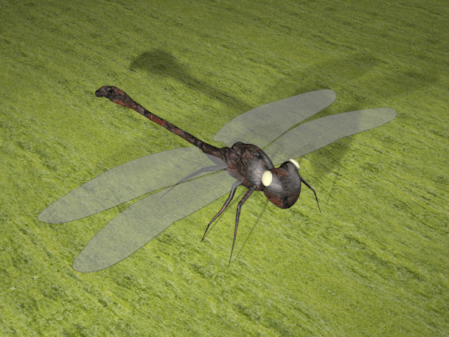 Dragonfly 3D Projects