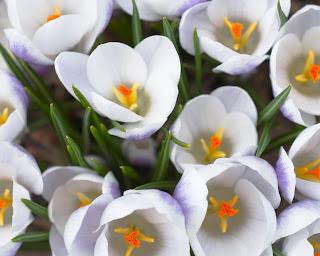 Beauty of Flower Wallpaper