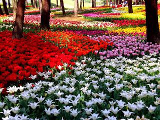 cientos de flores de colores