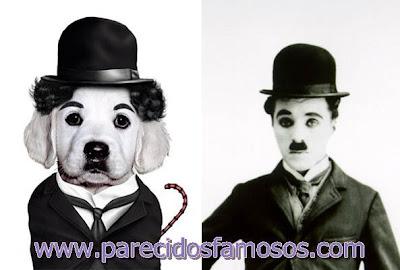 Perro con Charlie Chaplin