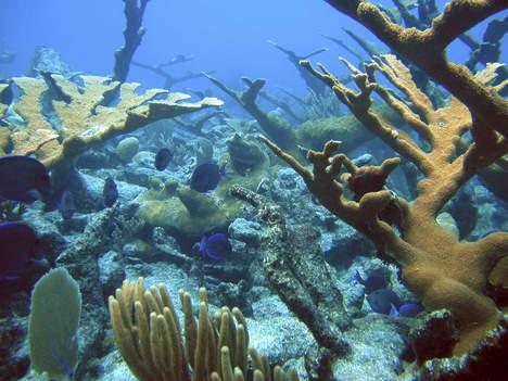 L'acidification des océans la plus rapide depuis 300 millions ?