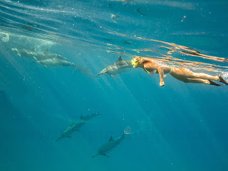 http://www.tropicallight.com/water/dolphins/26nov13dolphins/26nov13dolphins.html