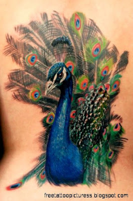 Peacock Tattoo Designs Ideas Pictures Gallery Online  Stylez