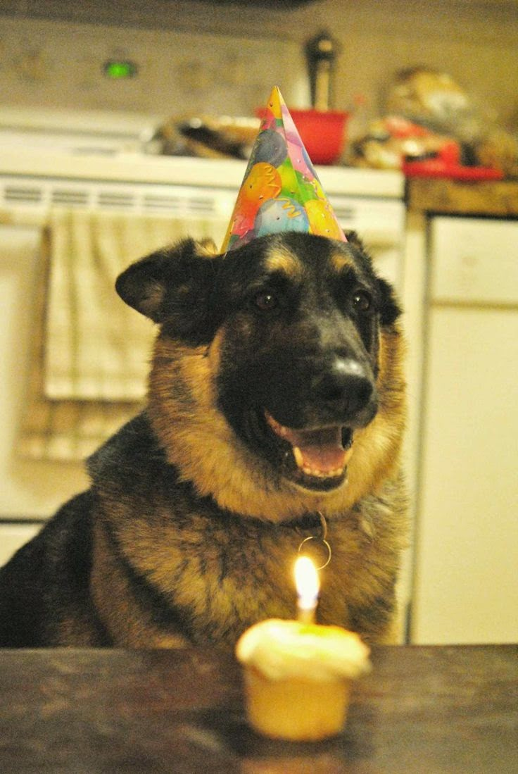 Cute German Shepherd Dog Birthday