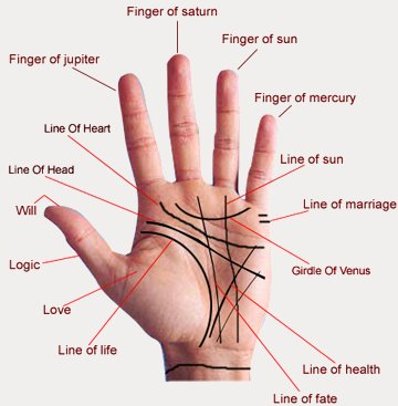 Islamicraft: Palmistry: Lines