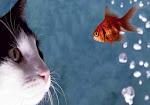 Chaton et poisson rouge